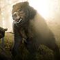 Red Dead Online : Tous aux abris et chasse aux animaux sauvages